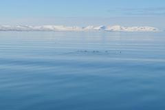 Svalbard 2009 077